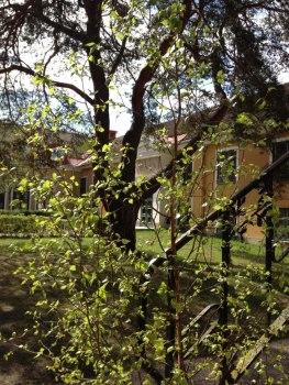 Tärna folkhögskola