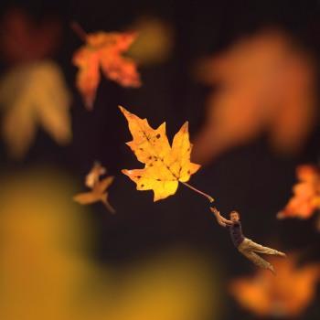 Bilden kommer från http://www.flickr.com/photos/fiddleoak