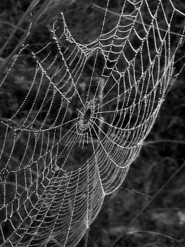 Bättre spindelnät